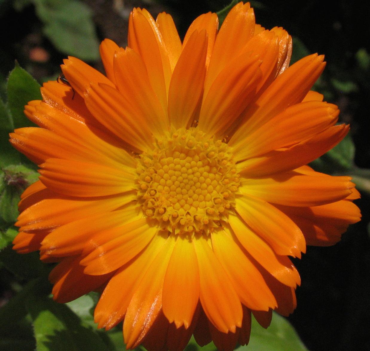 Heilpflanzenwissen.at – Die Plattform für Heilpflanzen